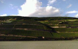 Winnica Berg Rottland widziana z drugiego brzegu Renu.