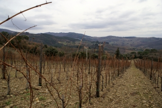 Winnice pod Greve in Chianti