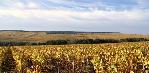 Montmains premier cru vineyard Chablis