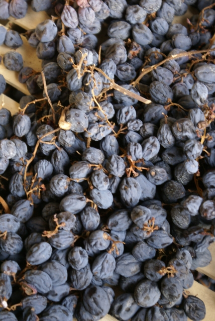 appassimento grapes drying for amarone